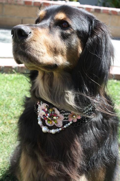 Ring Bearer Dog Collar